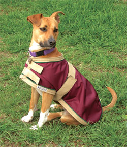 Blue Ribbon Custom Dog Rain Sheet