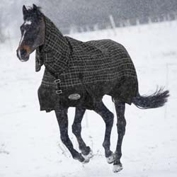 Shires StormBreaker Turnout Blanket