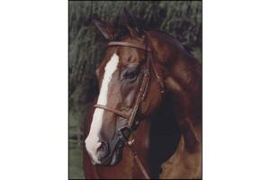 Arc De Triomphe Renaissance Bridle in Nut Brown