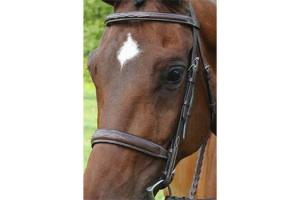 Arc De Triomphe Brown Tribute Bridle