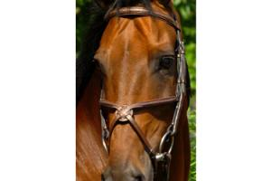 Arc De Triomphe Imperial Figure 8 Bridle in Brown