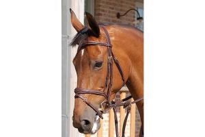 Dy'on Anatomic Bridle with Flash