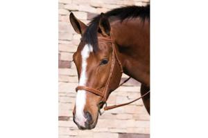 RHenri De Rivel Fancyaised Havana Padded Bridle