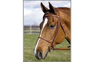 Henri De Rivel Pro Fancy  Raised Oakbark Bridle