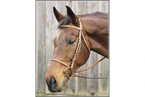 Henri De Rivel Oakbark Pro Plain Raised Bridle