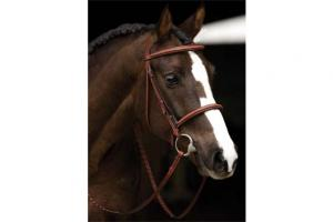 Amigo Hunter Bridle