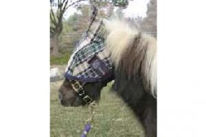 Kensington Mini Fly Mask with Ears