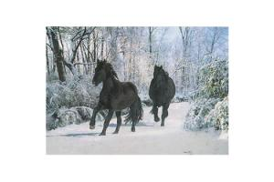 Snowy Trot Black Stallions Boxed Christmas Cards