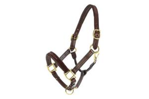 Vespucci Fancy Stitched Padded Brown Halter