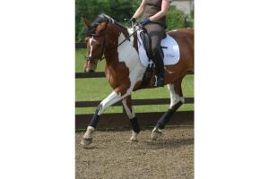 Equilibrium Stretch & Flex Flatwork Wraps in Black