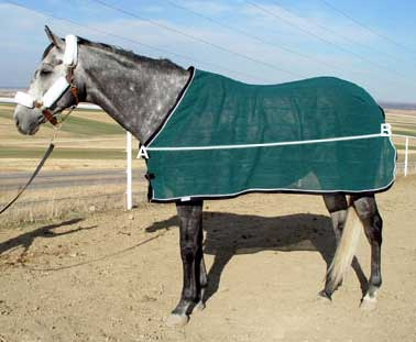 How To Measure Your Horse For A Blanket