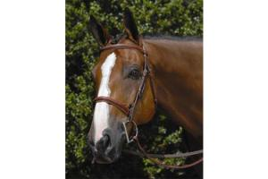 Vespucci Fancy Raised Hunter Bridle Oakbark