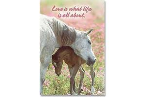 Love Is What Life Is All About Horse Magnet
