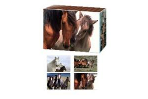 Enchanting Equus Boxed Note Cards