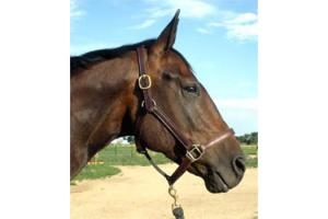 Pro Series Brown Leather Stable Halter