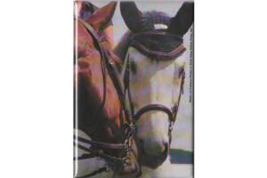 Two Cuddling Horses Magnet