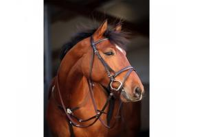 Amigo Leather Bridle in Brown