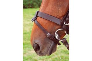 Shires Flash Strap